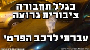 תמונות של חתולים סוחטים לייקים